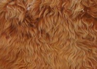 Комплект из двух натуральных меховых накидок (овчина) цвет рыжий длинный ворс по всей площади (срок поставки под заказ от 1 до 3 дней) - Интернет магазин запчастей Volvo и Land Rover,  продажа запасных частей DISCOVERY, DEFENDER, RANGE ROVER, RANGE ROVER SPORT, FREELANDER, VOLVO XC90, VOLVO S60, VOLVO XC70, Volvo S40 в Екатеринбурге.